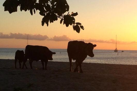 St Kitts, Nevis & St Eustatius